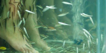 Fiskpedikyr exotisk